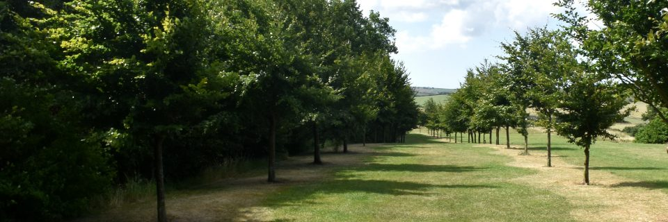 Grounds maintenance contracts can involve maintaining tree lined walkways.
